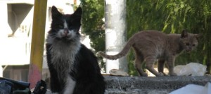 Fare Thee Well, Oh Cats of Jerusalem