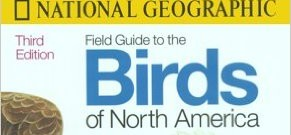 I Memorized 875 North American Birds During Paternity Leave